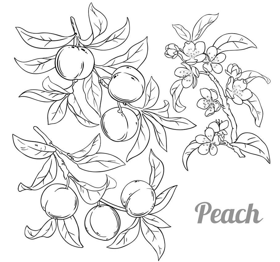 Desenhos de Pêssegos 3 para colorir