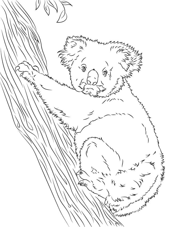 Desenhos de Coala Selvagem 1 para colorir