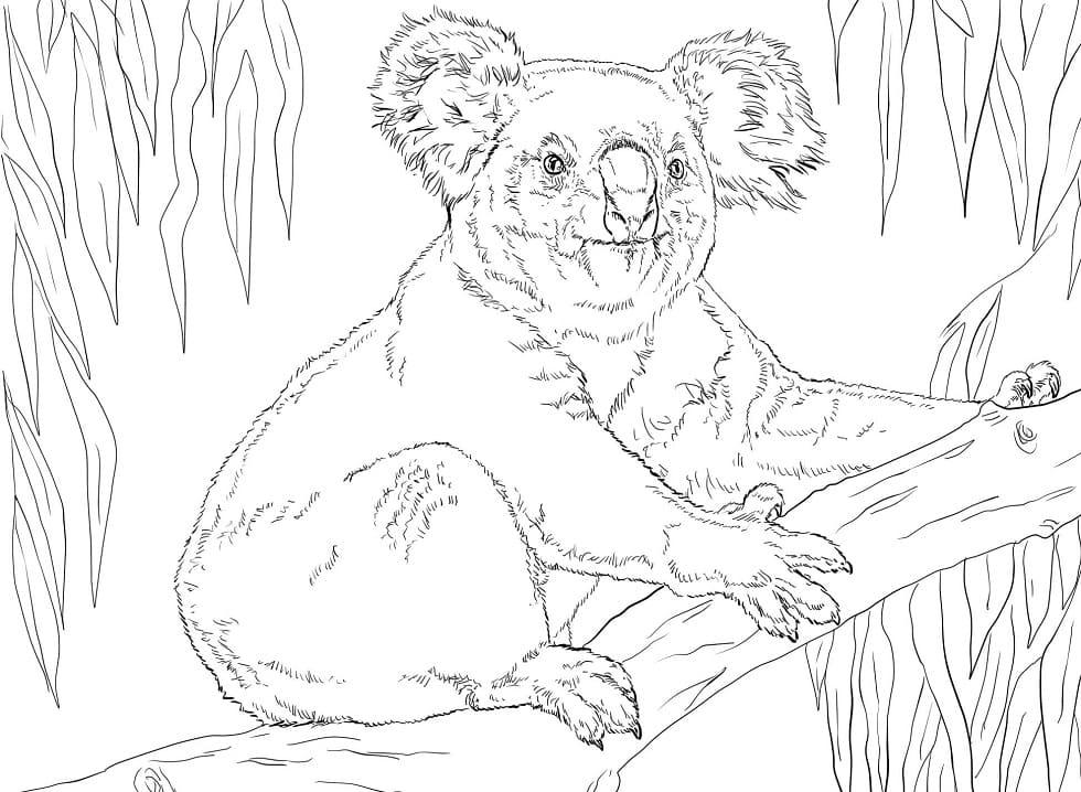 Desenhos de Coala Selvagem 2 para colorir