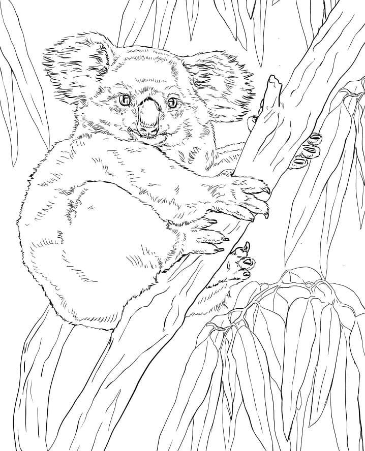 Desenhos de Coala Selvagem para colorir 3 para colorir