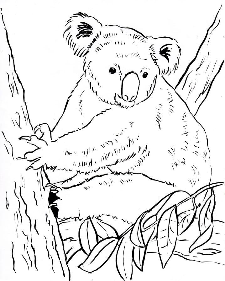 Desenhos de Coala Selvagem para colorir 5 para colorir