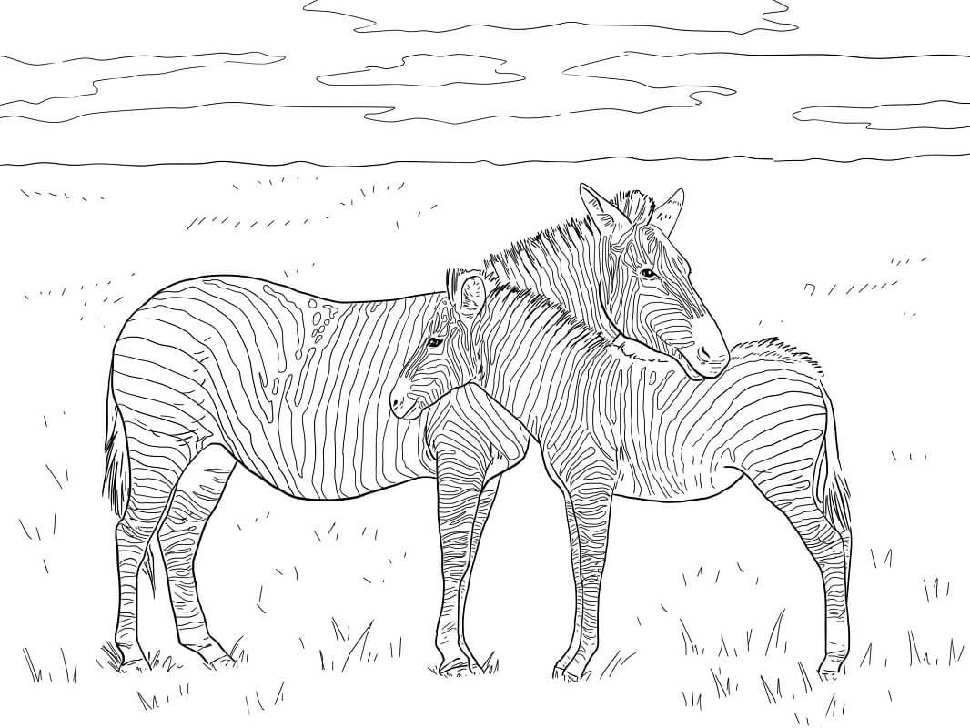 Desenhos de Duas Zebras para colorir