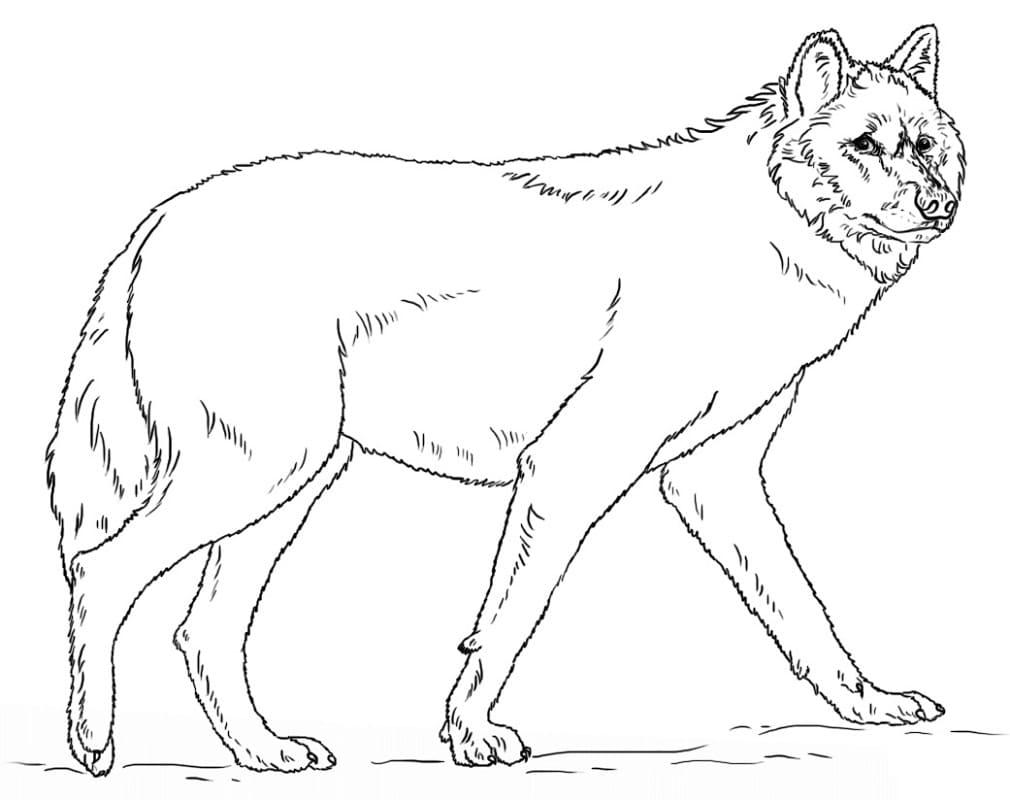 Desenhos de Lobo Selvagem 1 para colorir