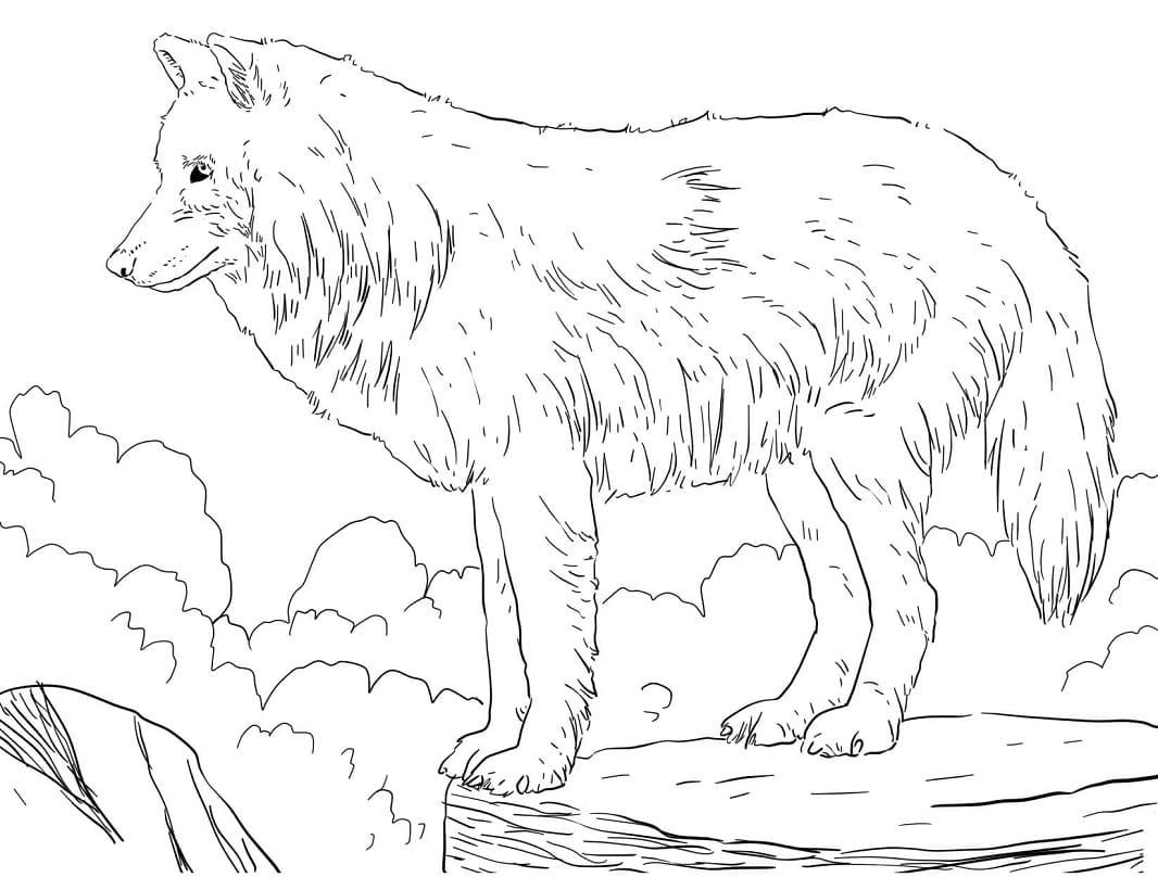 Desenhos de Lobo Selvagem 2 para colorir