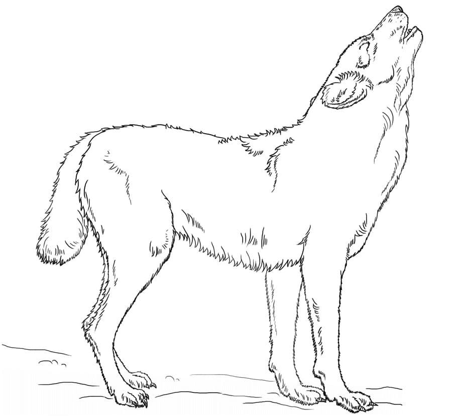 Desenhos de Lobo Selvagem 4 para colorir