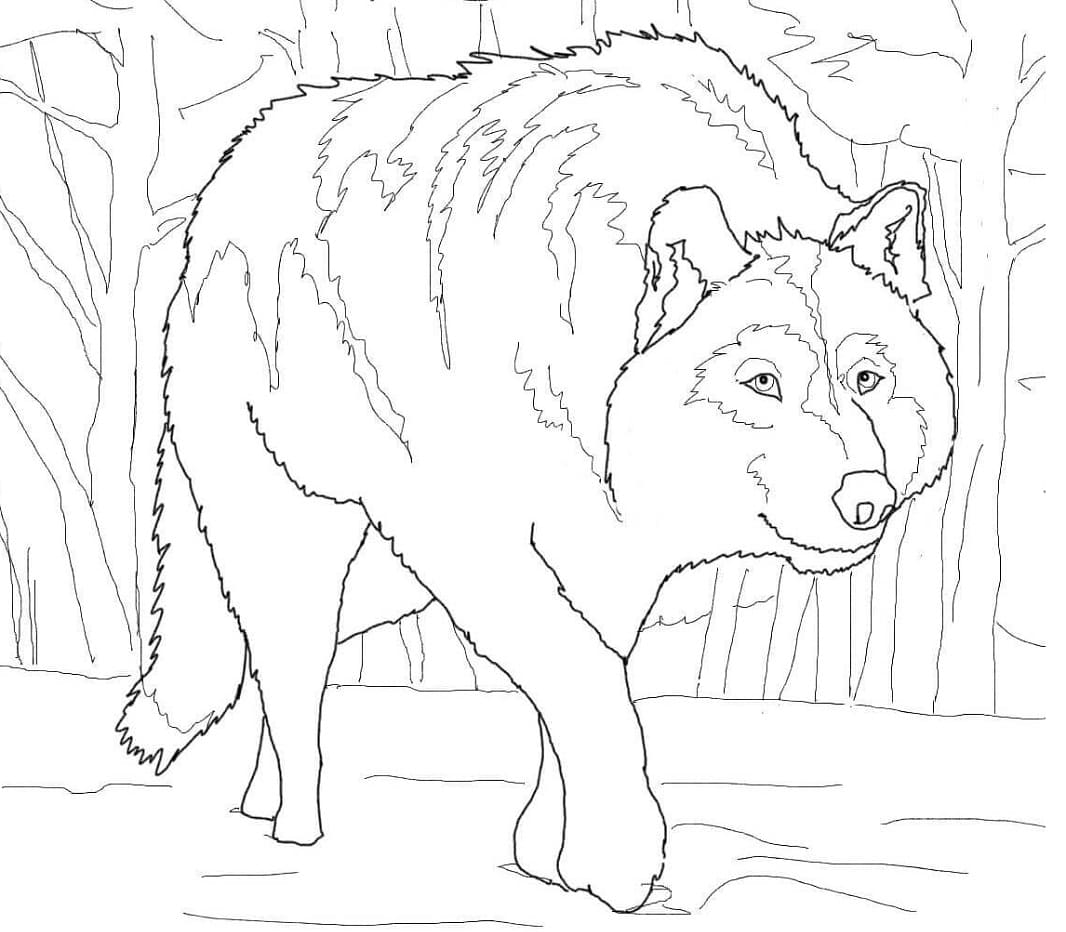 Desenhos de Lobo Selvagem 5 para colorir