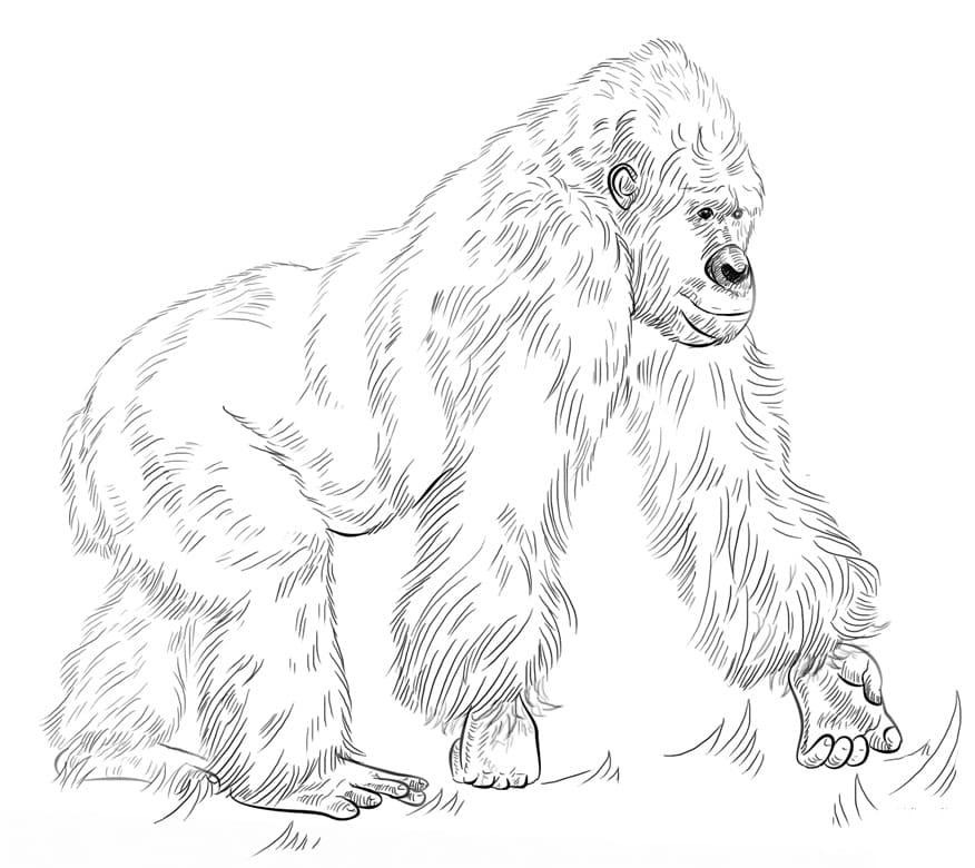 Desenhos de Macaco Selvagem 1 para colorir