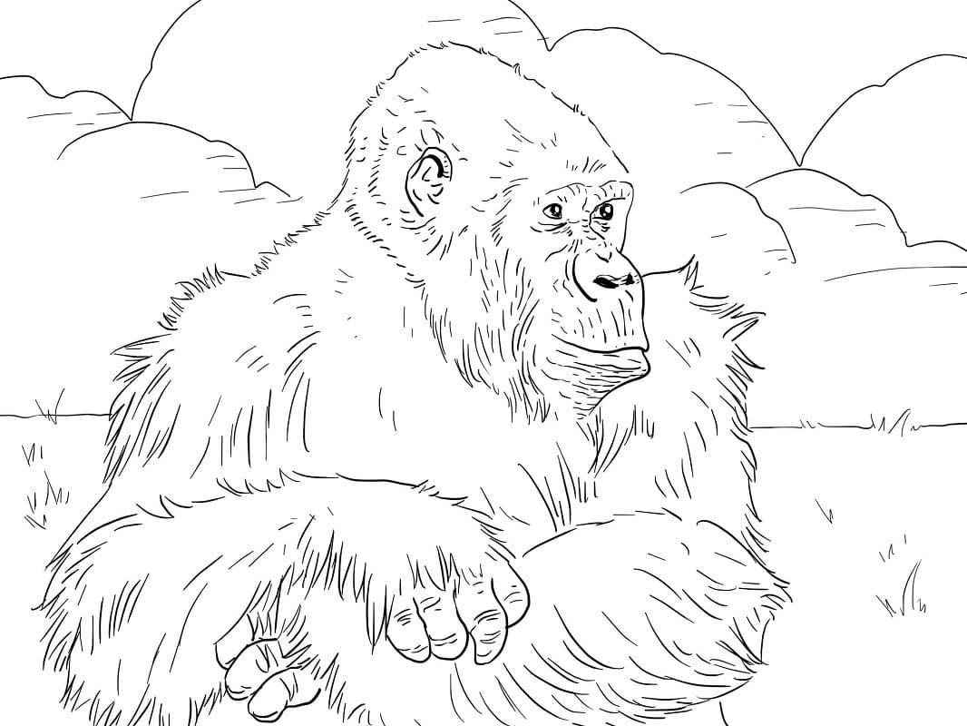 Desenhos de Macaco Selvagem 2 para colorir