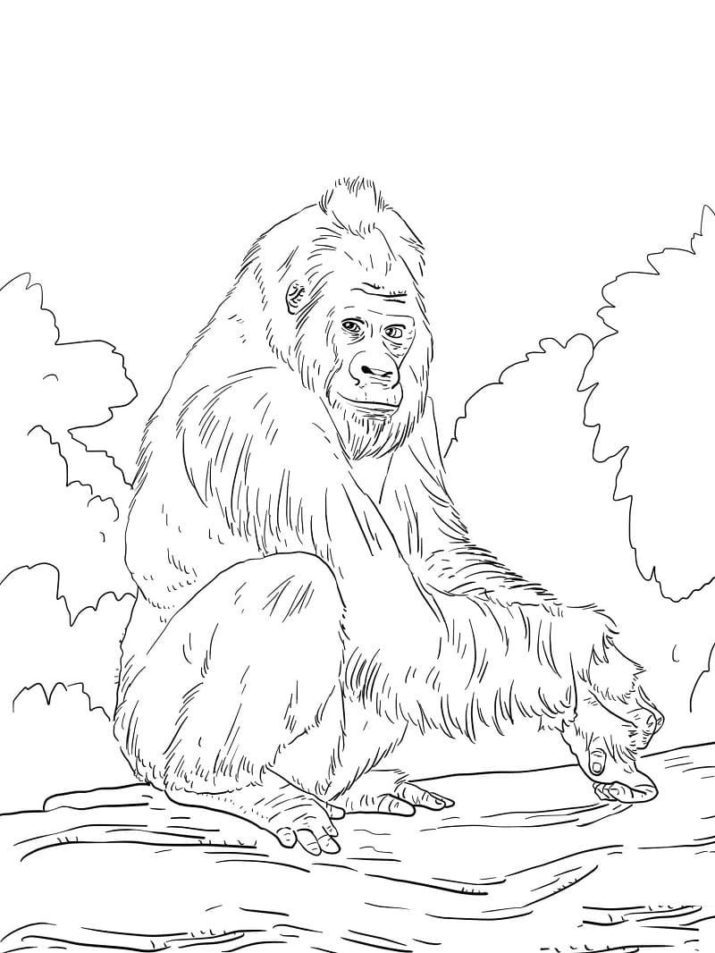 Desenhos de Macaco Selvagem 3 para colorir