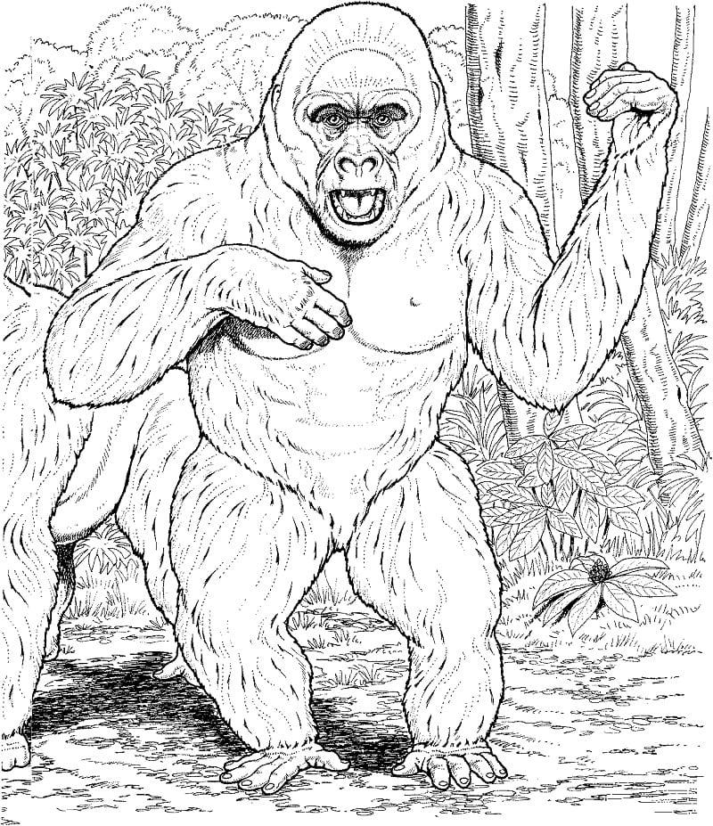 Desenhos de Macaco Selvagem 4 para colorir