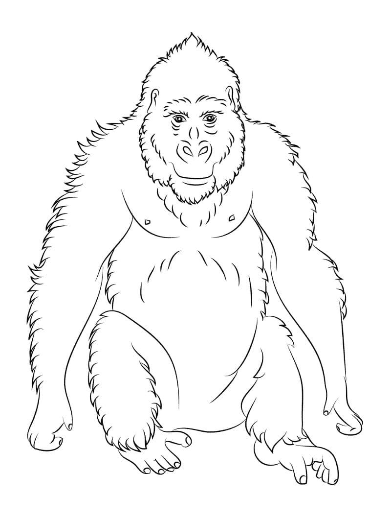 Desenhos de Macaco Selvagem 5 para colorir