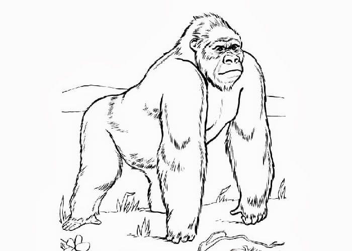 Desenhos de Macaco Selvagem para colorir