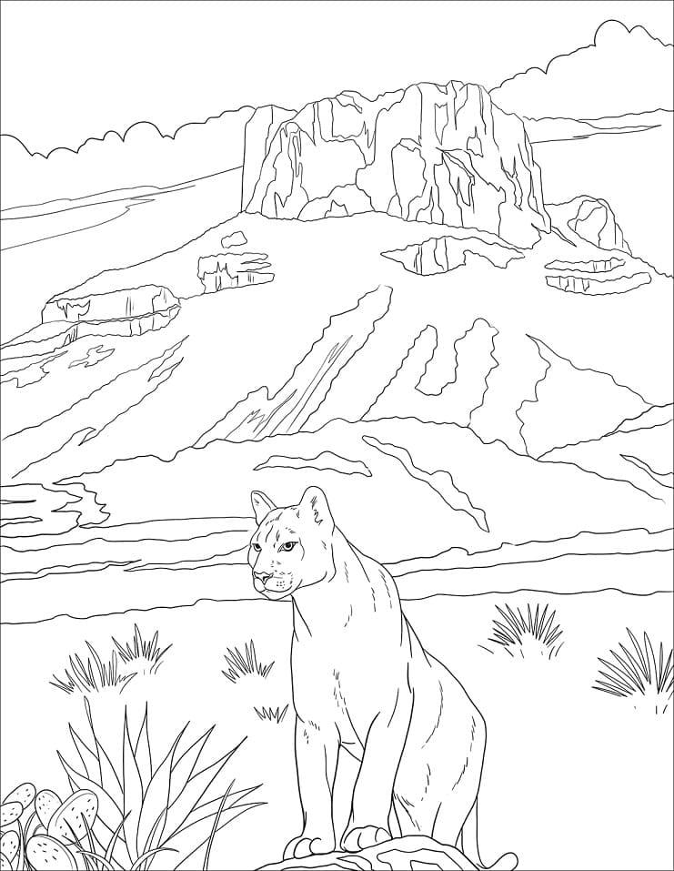 Desenhos de Puma Selvagem 1 para colorir