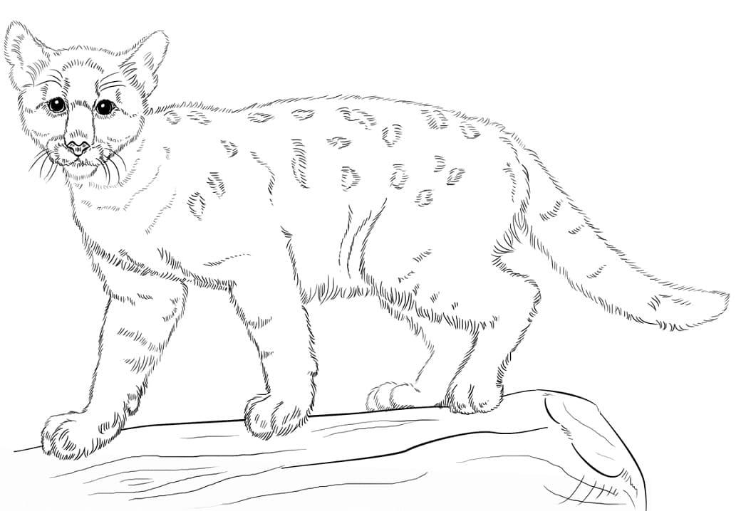 Desenhos de Puma Selvagem 2 para colorir