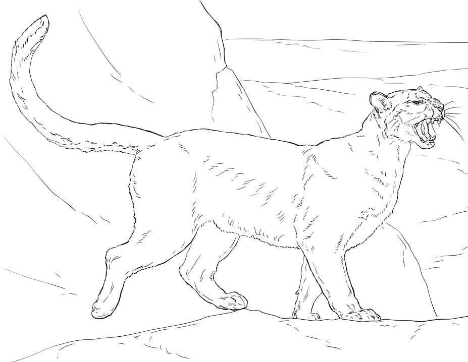Desenhos de Puma Selvagem 3 para colorir