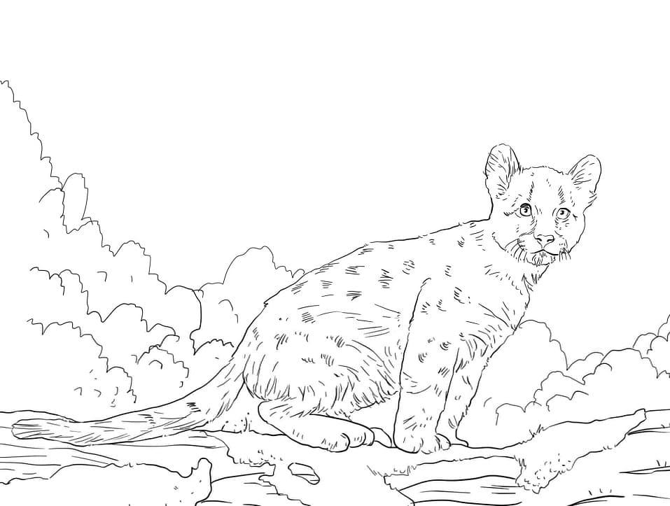 Desenhos de Puma Selvagem 4 para colorir