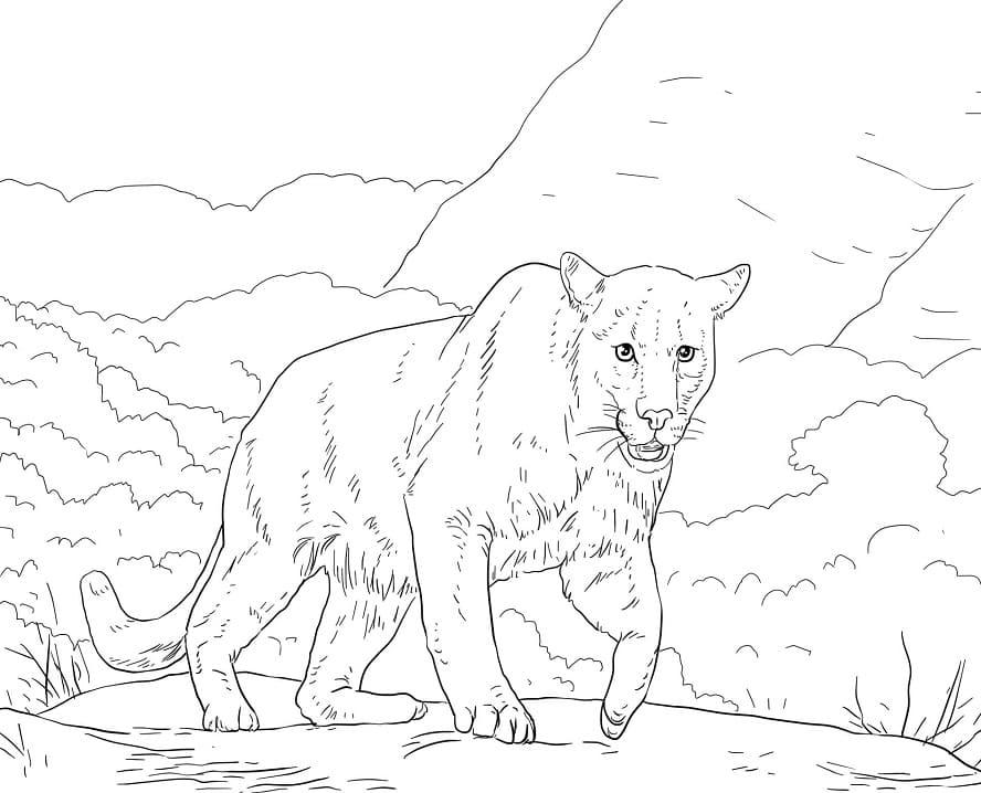 Desenhos de Puma Selvagem 5 para colorir