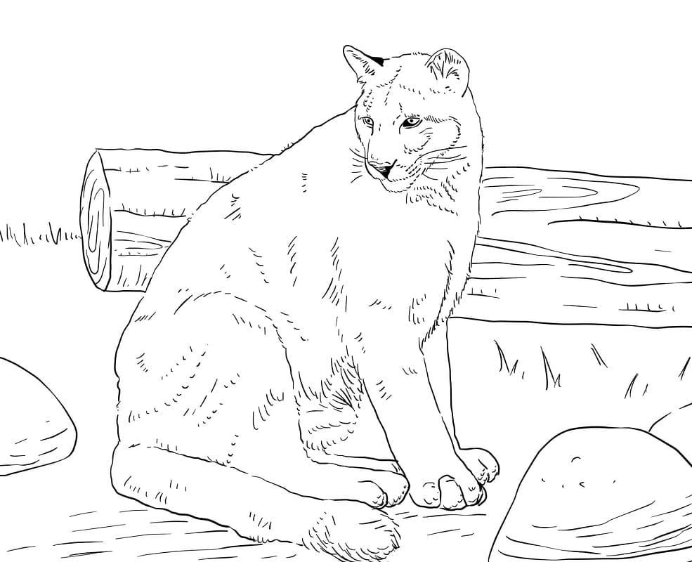 Desenhos de Puma Selvagem para colorir