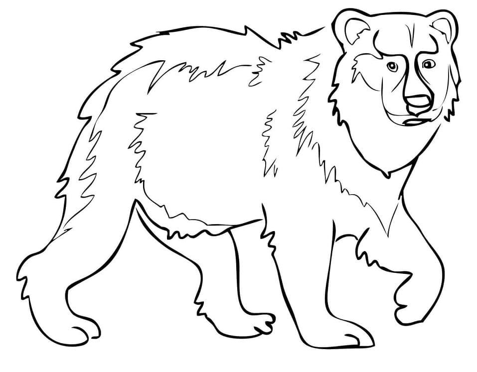 Desenhos de Urso Selvagem 1 para colorir