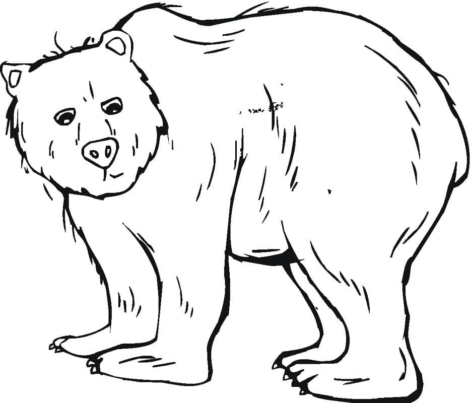 Desenhos de Urso Selvagem 2 para colorir