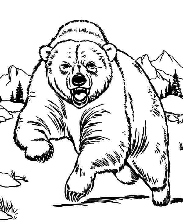 Desenhos de Urso Selvagem 3 para colorir