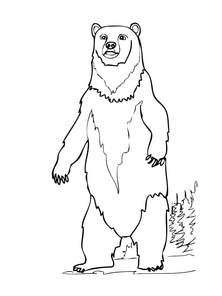 Desenhos de Urso Selvagem para colorir