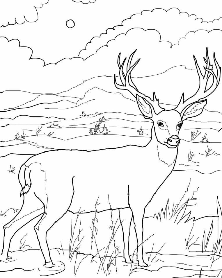 Desenhos de Veado Selvagem 1 para colorir