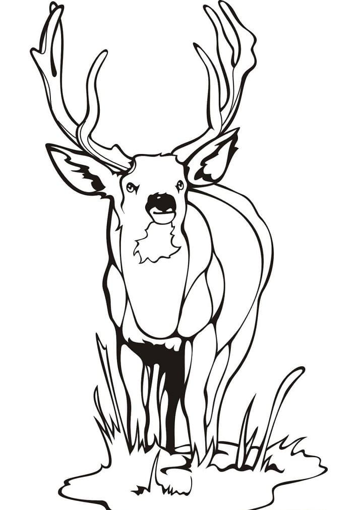 Desenhos de Veado Selvagem 2 para colorir
