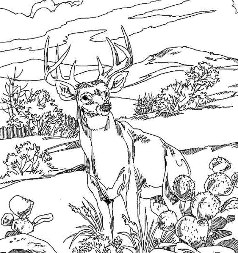 Desenhos de Veado Selvagem 3 para colorir