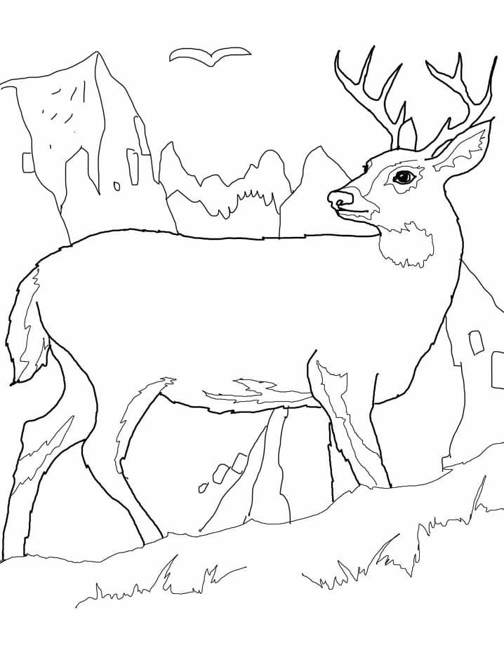 Desenhos de Veado Selvagem 4 para colorir