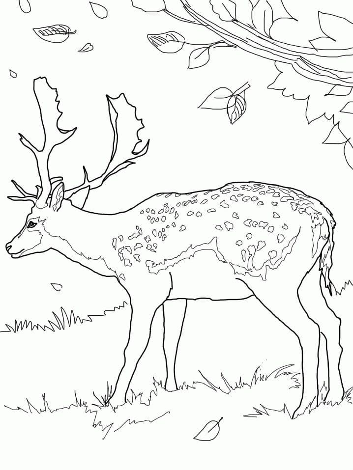 Desenhos de Veado Selvagem para colorir