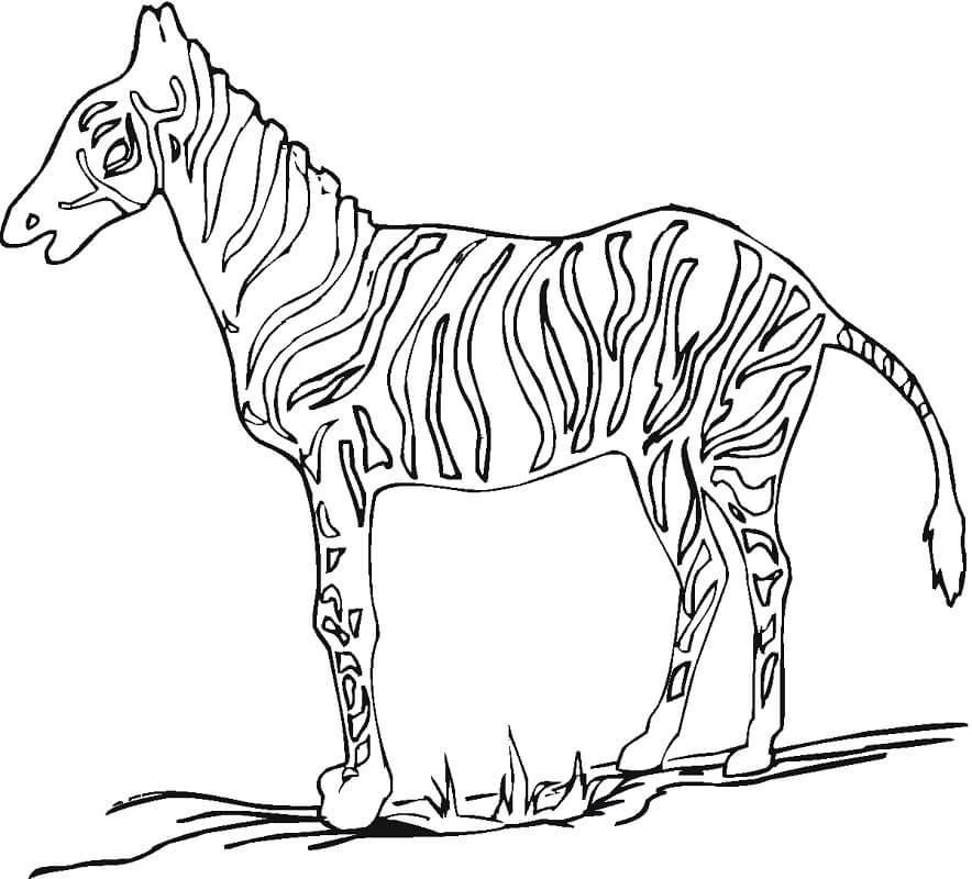Desenhos de Zebra Normal 1 para colorir