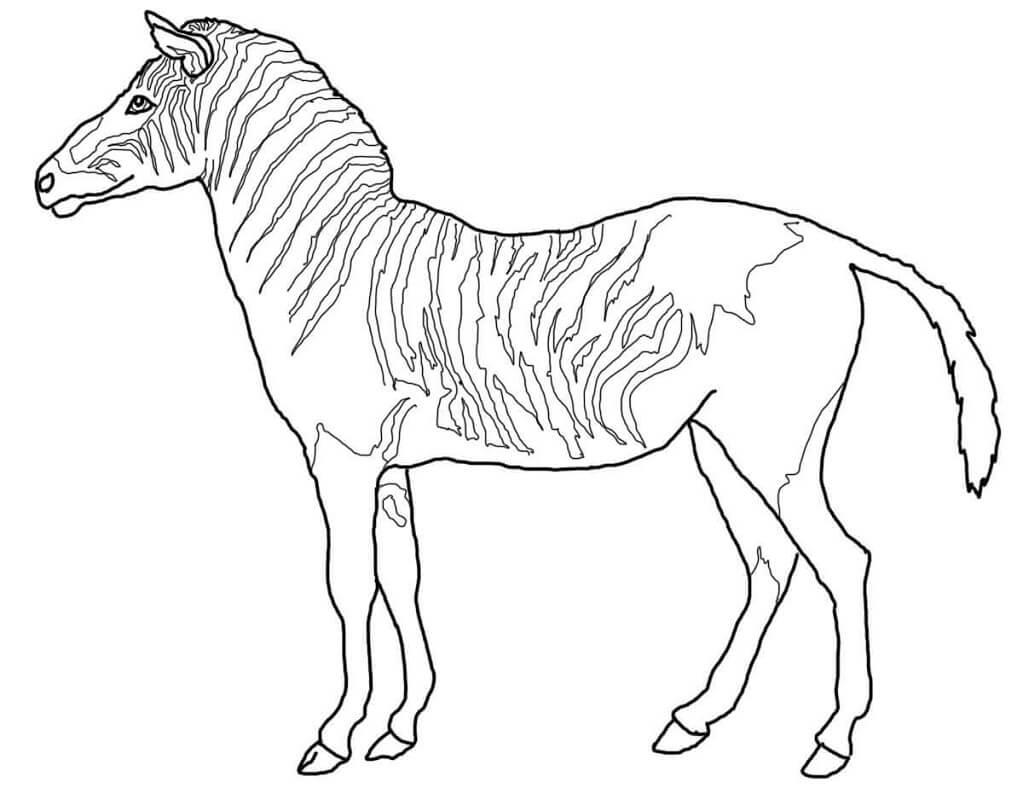 Desenhos de Zebra Normal 4 para colorir