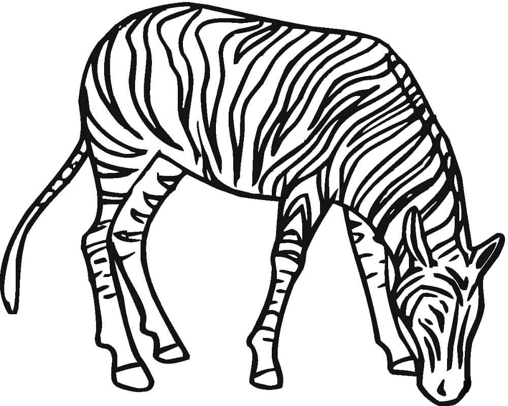 Desenhos de Zebra Normal para colorir