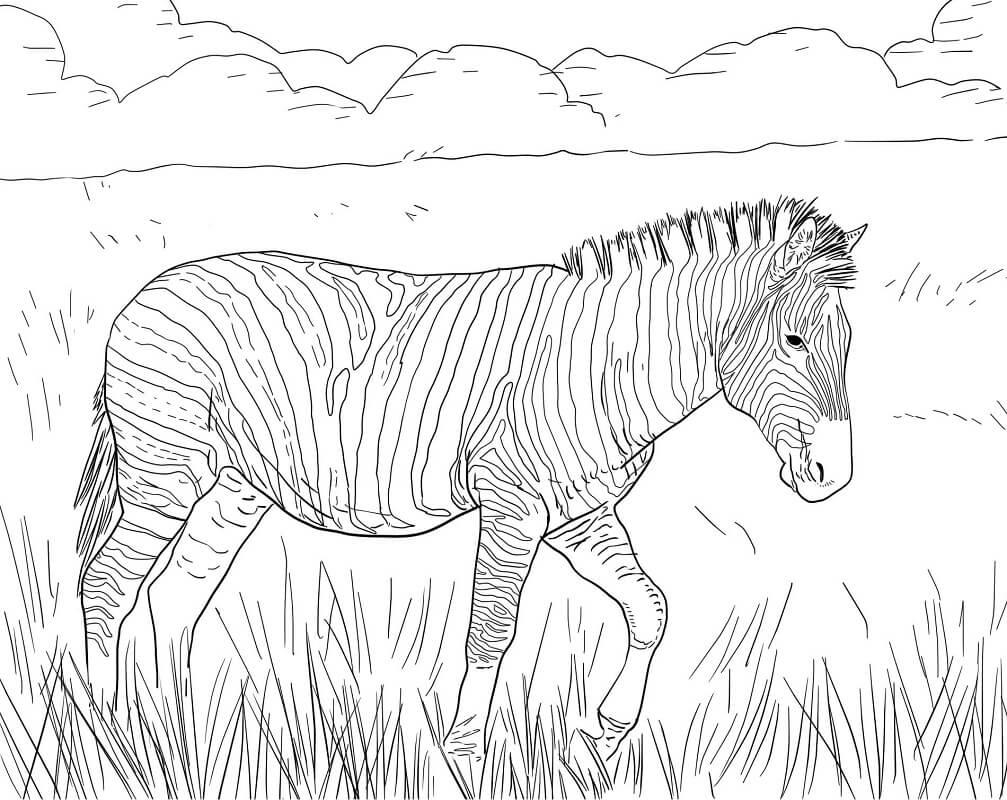 Desenhos de Zebra Selvagem 3 para colorir