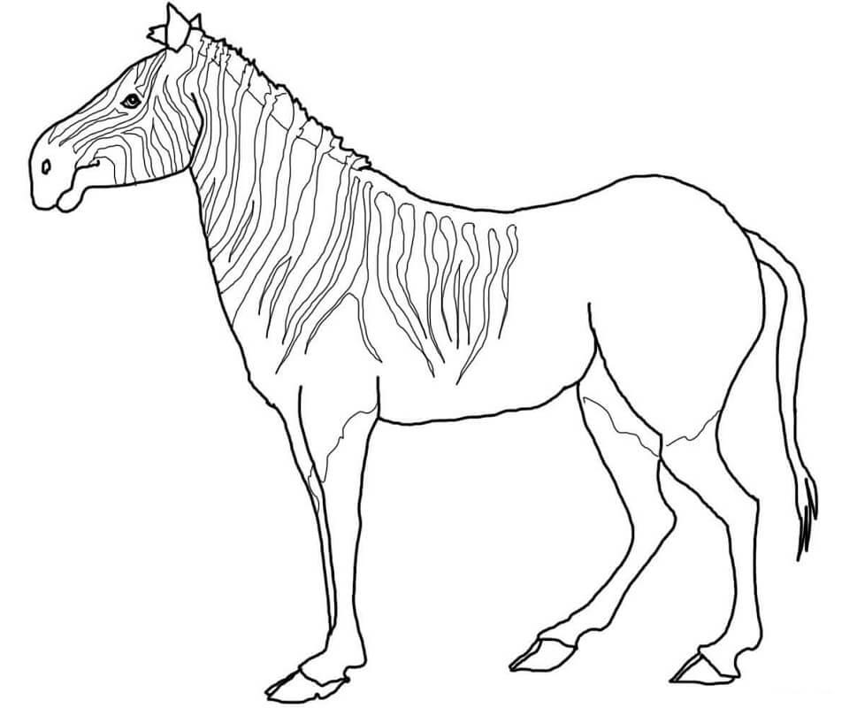 Desenhos de Zebra Selvagem 5 para colorir