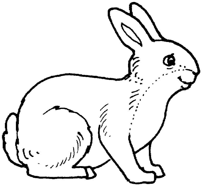 Desenhos de Adorável Coelho da Páscoa 2 para colorir