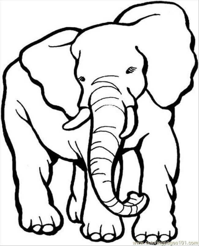 Desenhos de Elefante Grande para colorir