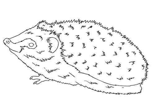 Desenhos de Ouriço Básico para colorir