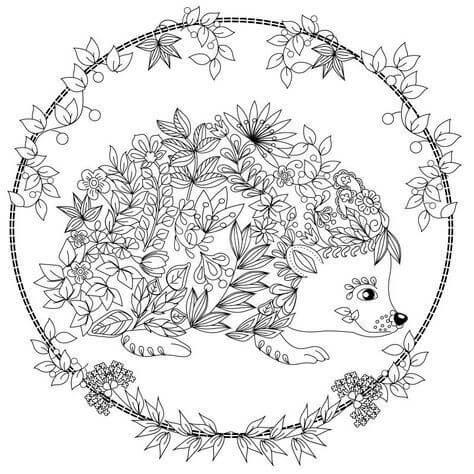 Desenhos de Ouriço Fofo para colorir