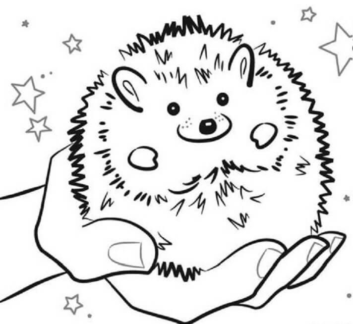 Desenhos de Ouriço Na Mão para colorir