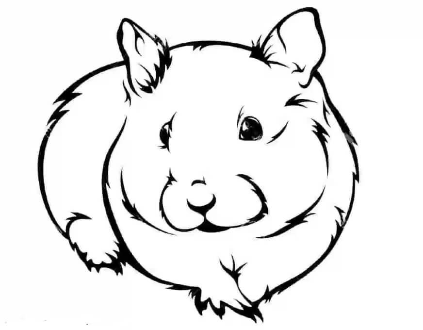 Desenhos de Hamster, Correndo para colorir