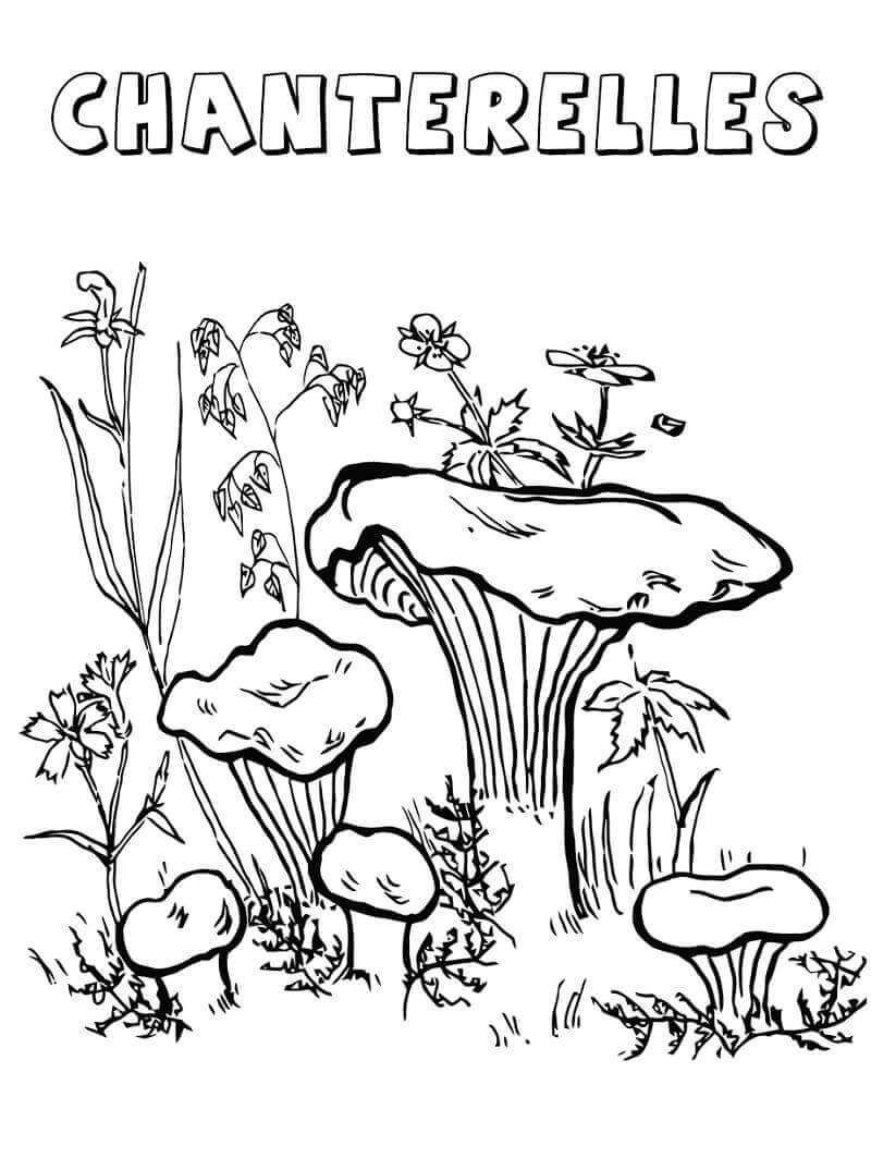 Desenhos de Cogumelo para Colorir